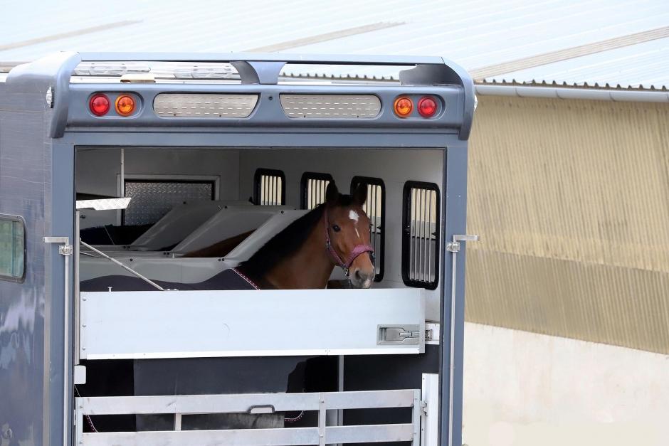 Importerade hästar kom med kvarka