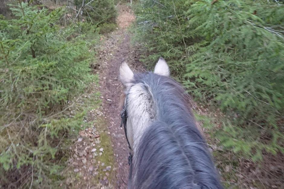 """""""Tyvärr har vi ofta en tendens att vilja forma alla hästar (och människor) efter samma mall"""""""