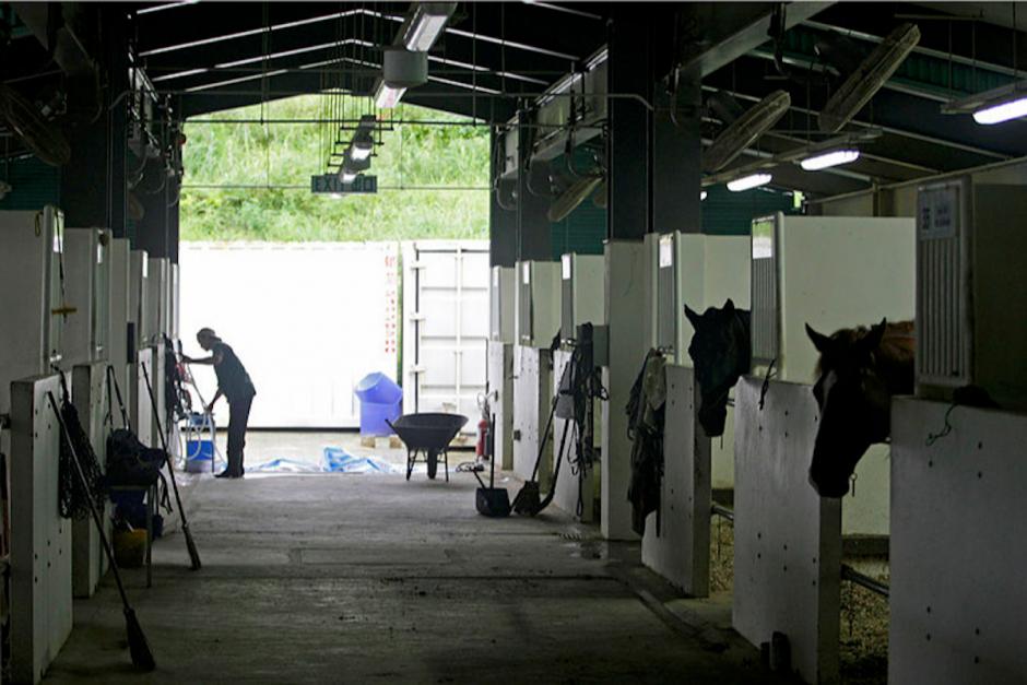 Miljoner till forskning om säkerheten för hästskötare