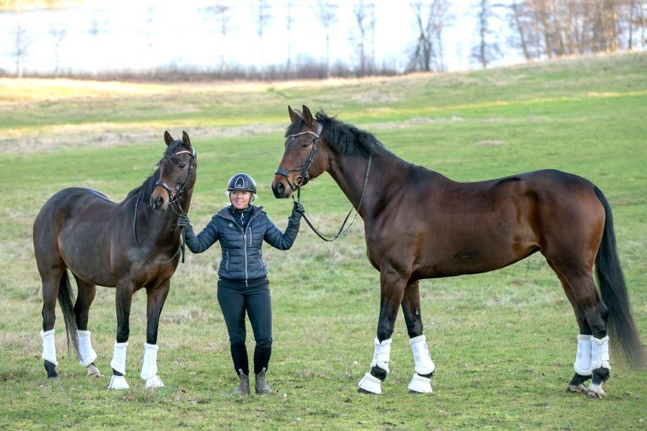 Små hästar kan hävda sig på de stora arenorna
