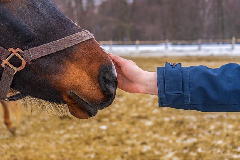 Hästen luktar sig till dina känslor