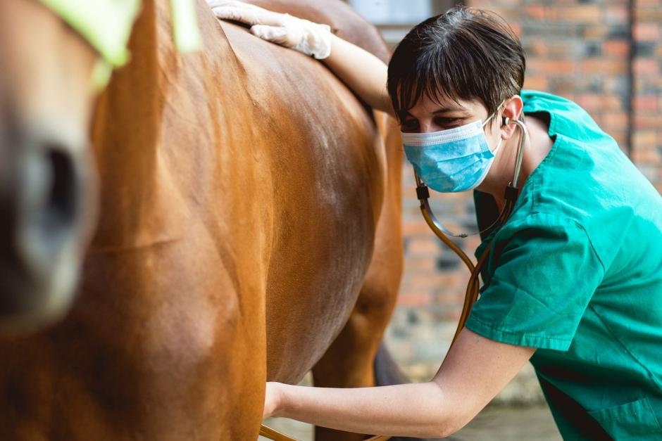 Vid grovtarmsinflammation kan hästen bli förgiftad inifrån