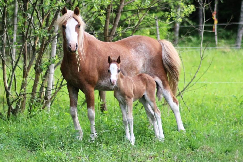 """Johannas blogg: """"Vissa kör störtlopp för att få en kick, jag föder upp djur"""""""