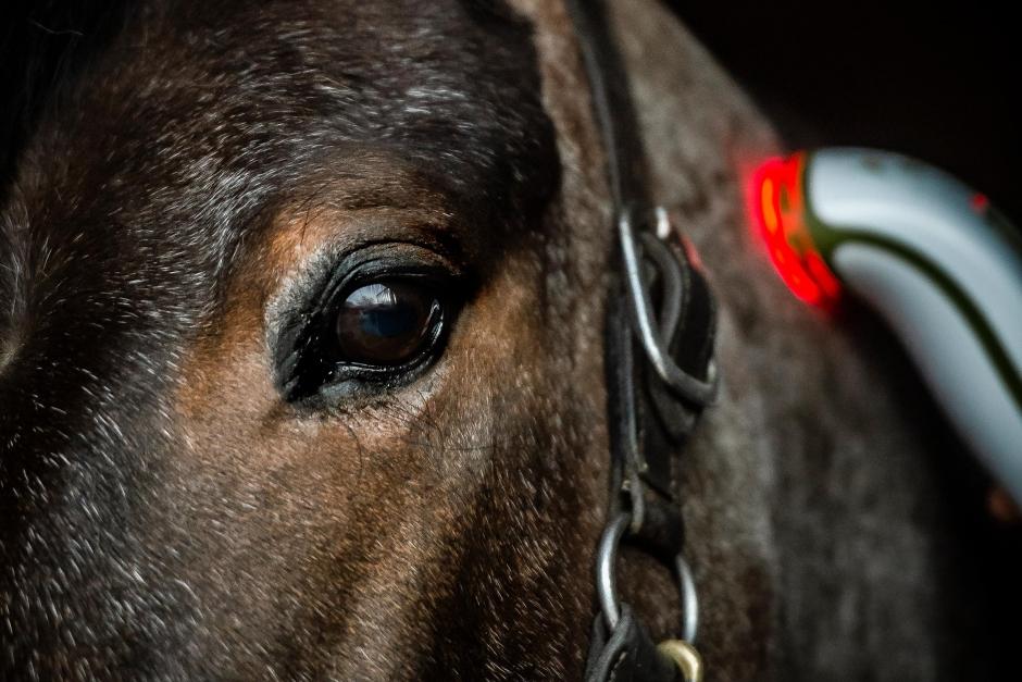 Ljusterapi: Få studier på häst stöder ljusets effekt