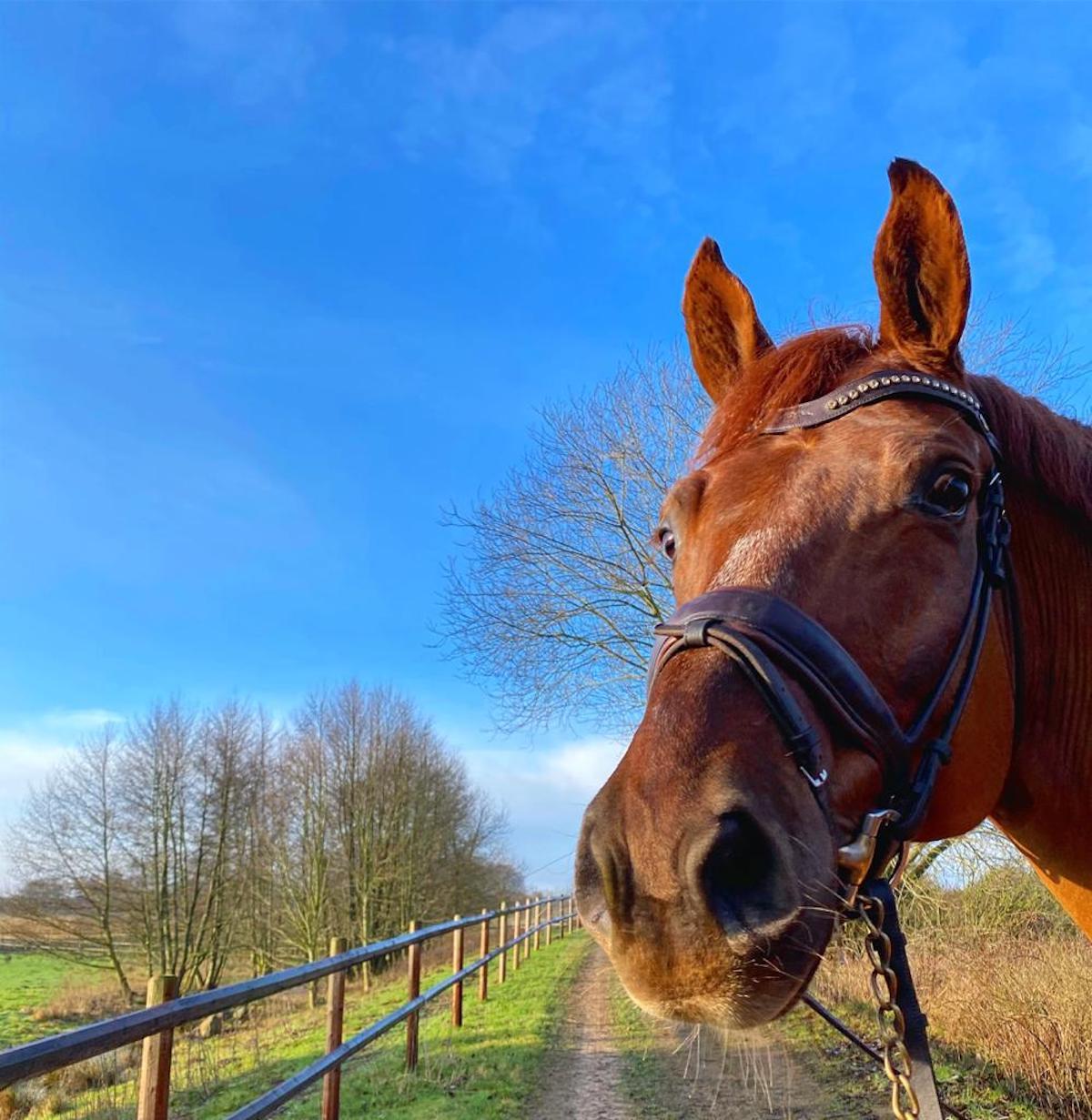 Minnas Nya Häst