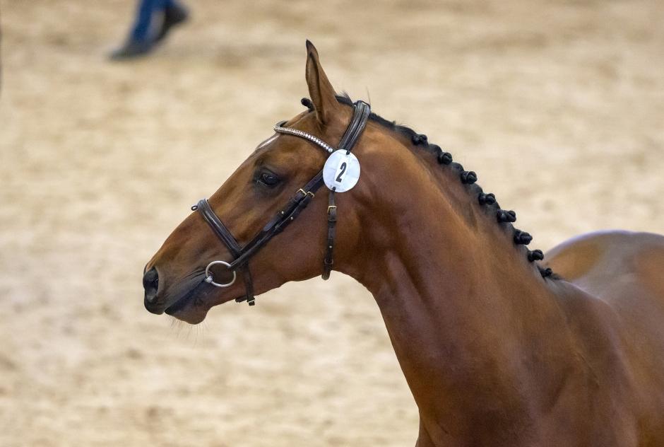 """Hästbyte gav godkänd hingst: """"Känns väldigt bra"""""""