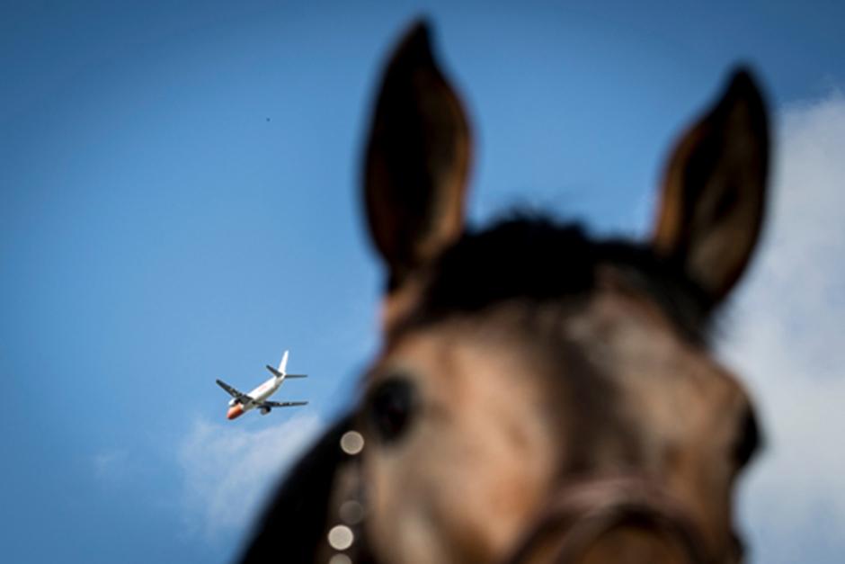 Ersättning till ägare av skrämd häst