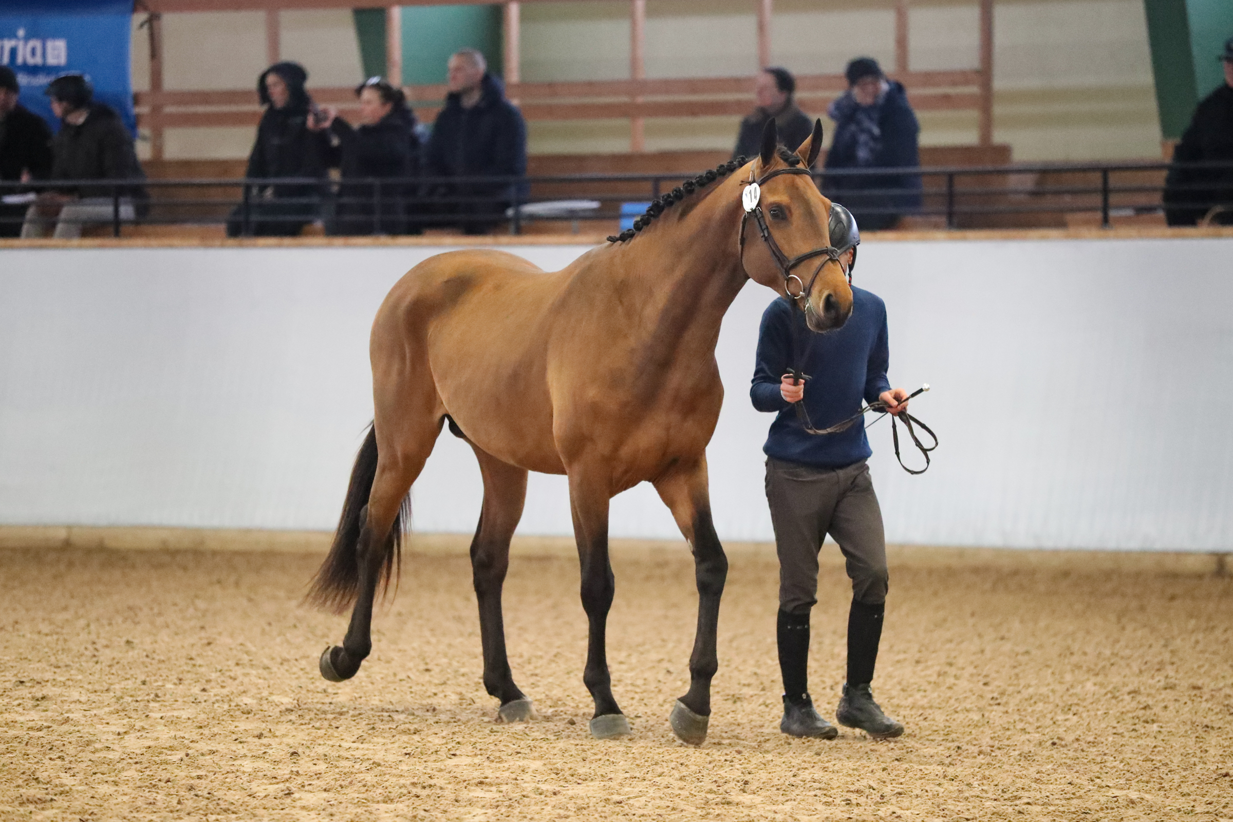 York Hästak Andre Brandt-8699