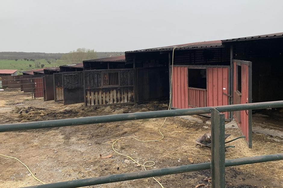 Fem hästar döda i stallbrand