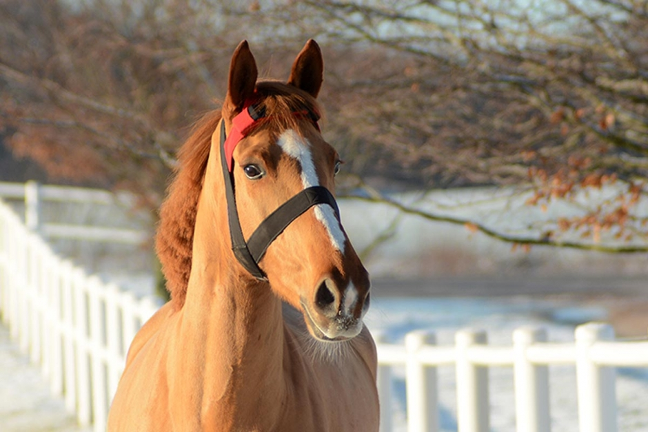 Hästens sätt att tugga kan mätas
