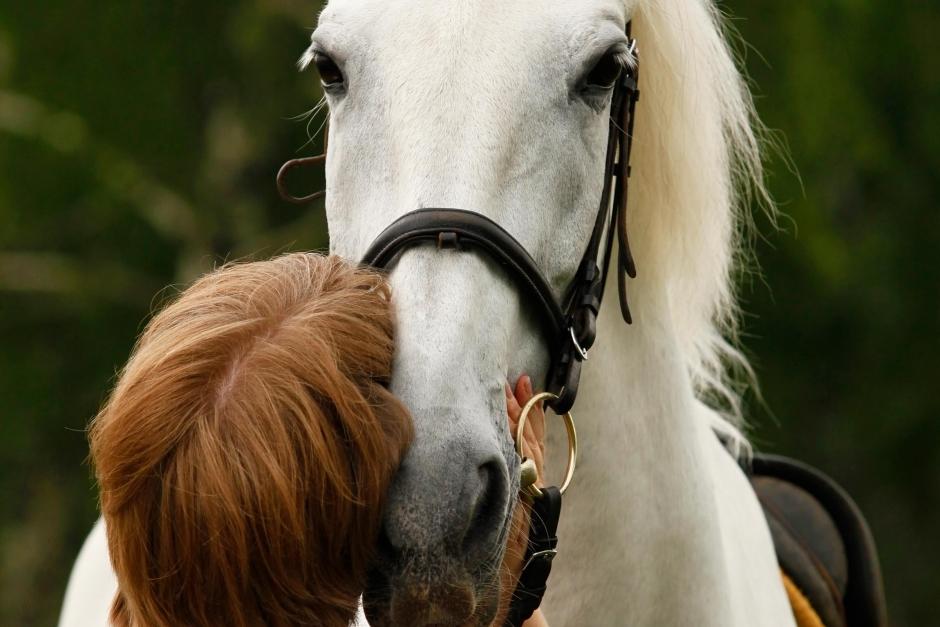 """""""Många gärningsmän hotar att slå benen av hästen"""""""