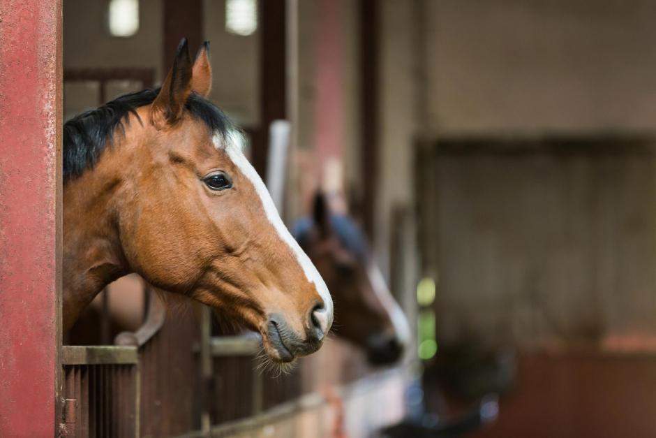 Förslag till ändrad lag vid hästförsäljning