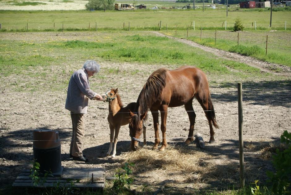 """Johannas blogg: """"Extremt ovanligt att ett sto accepterar ett nytt föl"""""""