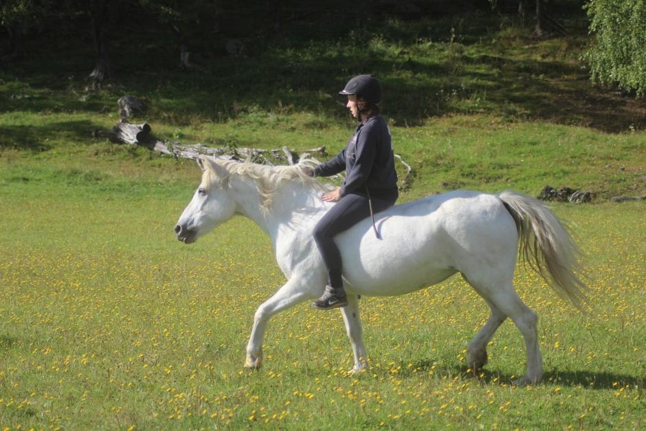 """Johannas blogg: """"En ära att få en liten del av hjärtat från sin häst"""""""