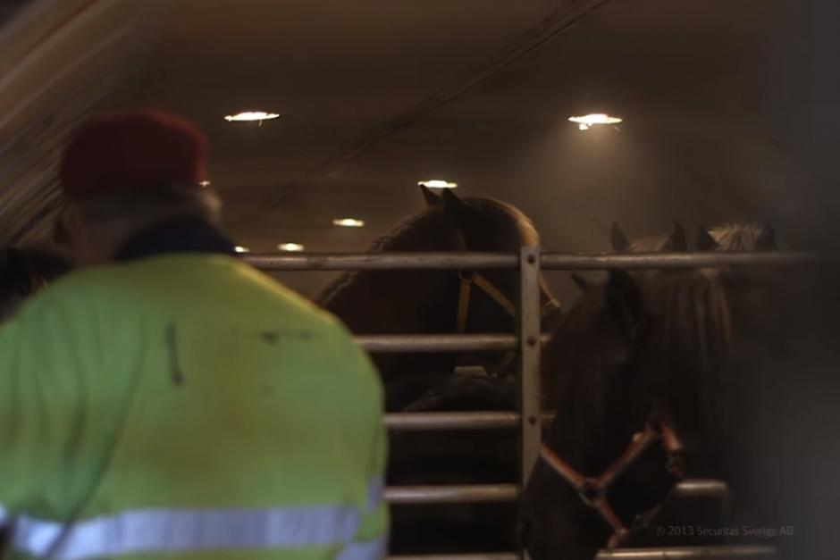 """Jordbruksverkets veterinär: """"Det är väldigt ovanligt med transportskador"""""""