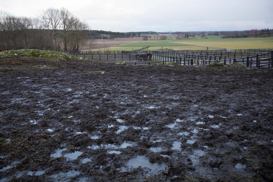 Gödselutredningen sågas av hästnäringen
