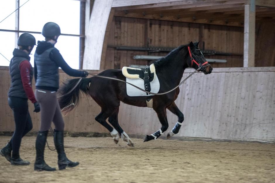 Forskningsnyheter: Utnyttja hästens trygghetszon