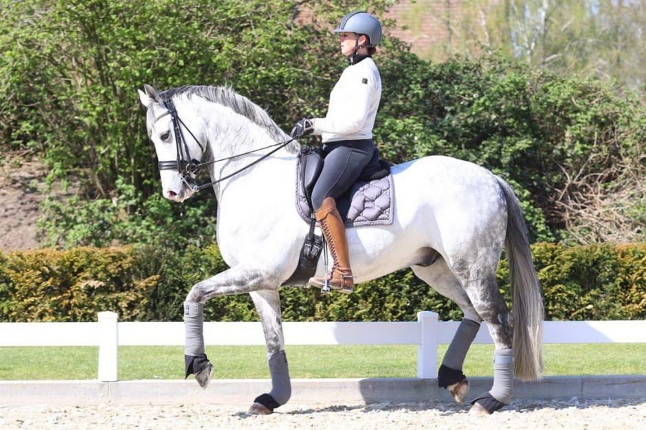 Ny GP-häst hos Lyndal Oatley