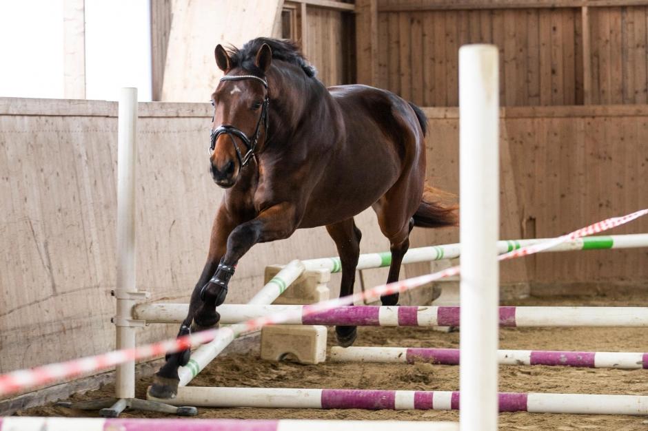 """Unghästutbildaren: """"Hästarna behöver tid att smälta sina upplevelser"""""""