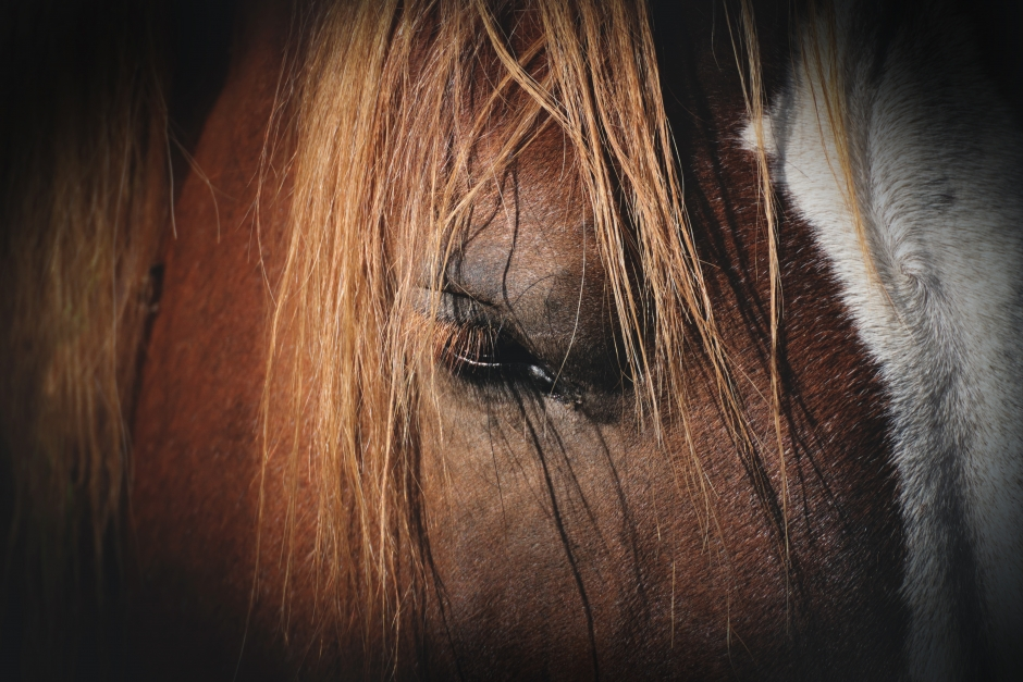 Stympade ponnyn dog av tarmvred