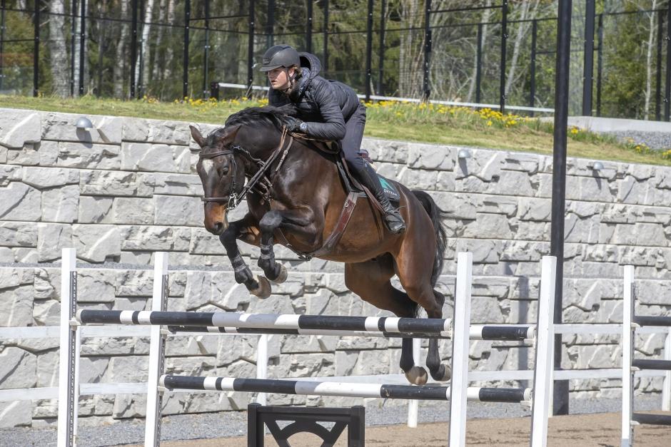 Hugo Wihlmarks häst till Grevlunda
