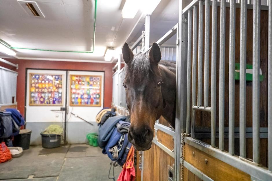 Hästens samhällsnytta lyfts i ny HNS-plan