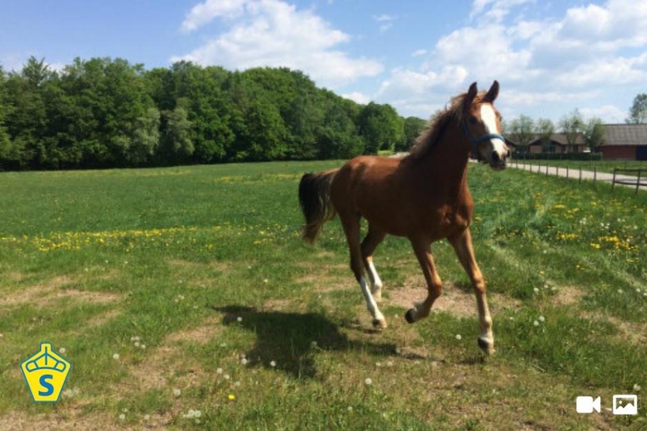 Ridsport och Hästlycka – ny marknadsplats för SWB-hästar