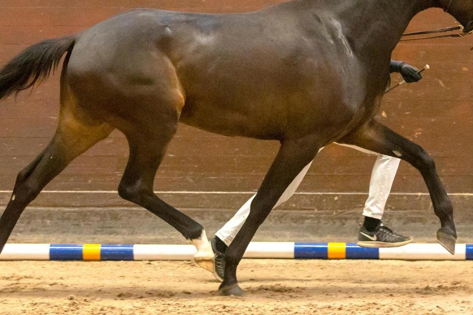 Uppmanar unga att visa hästar online