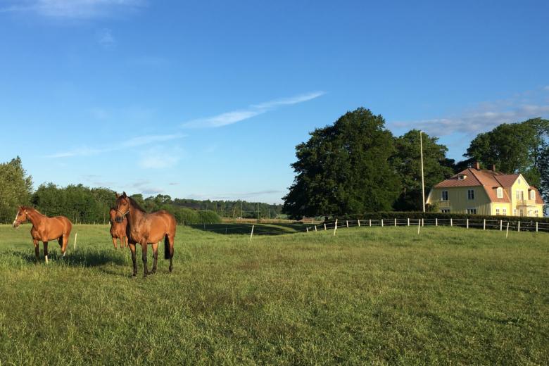 Hästar Dyrendahl Foto Carl Dyrendahl