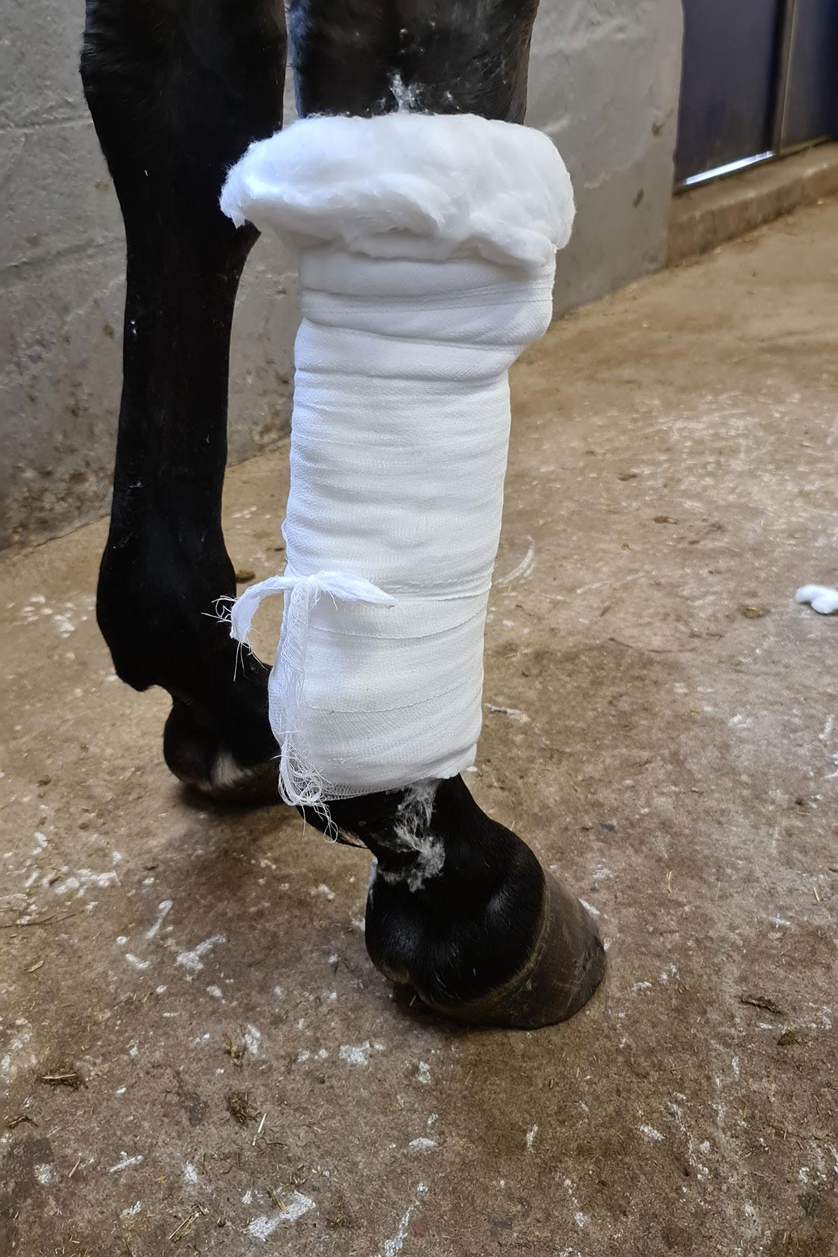 Sofierelander_bandage