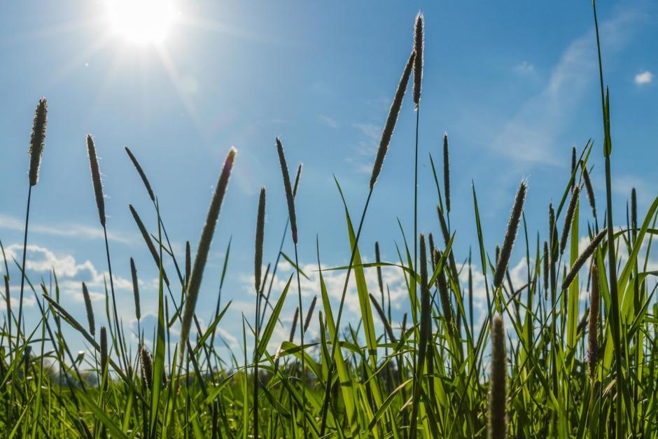 Allt du behöver veta om gräset – den gröna näringsbomben