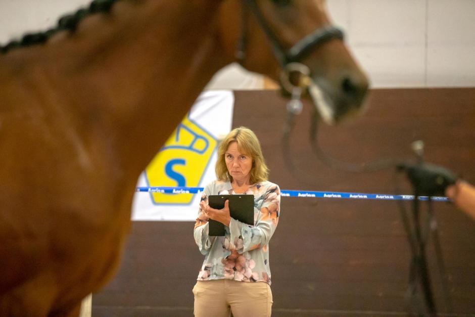 Stor brist på amatörhästar