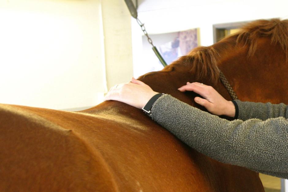 Stor variation i ryggrörelser hos hästar