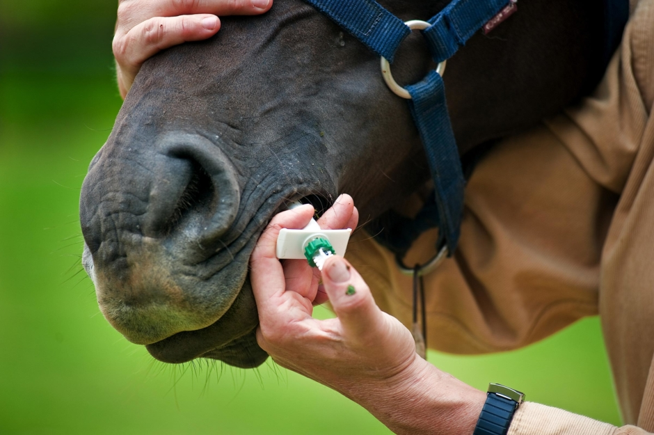 Hästmaskmedel används mot covid-19
