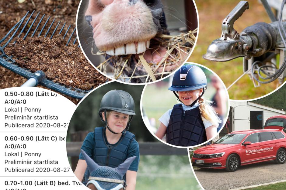 100 saker som kan hända en ponnypappa