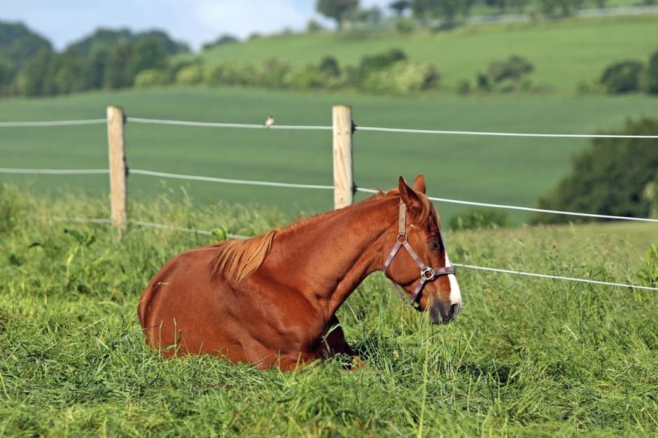 Forskningsnyheter: Hästars vaga sjukdomstecken
