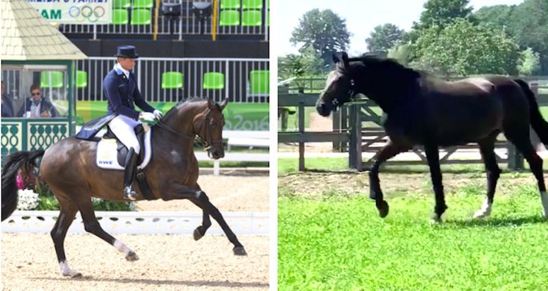 """Ägaren om OS-hästens nya liv: """"Ett nytt kapitel för både henne och mig"""""""