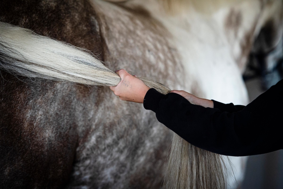 Rätt drag i svansen stärker hästen