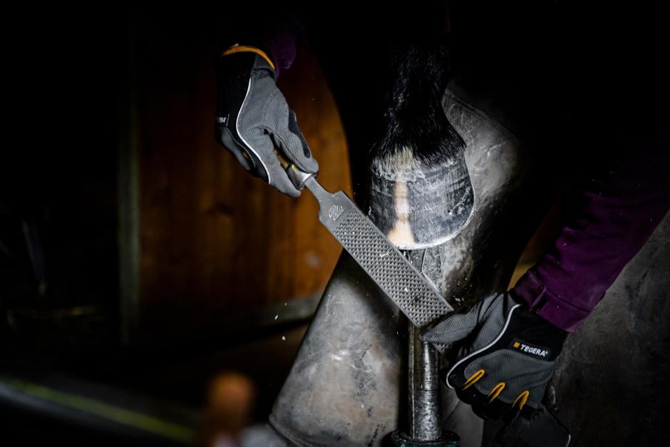 Sko oftare och var skonsam mot hästen