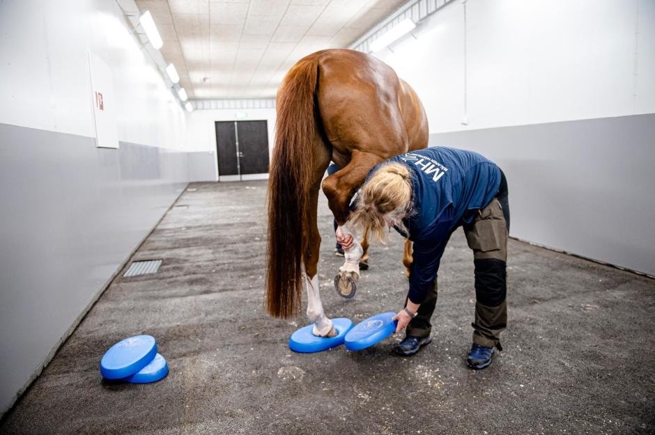Stärk hästen med balanskuddar