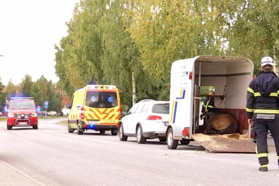 Häst fastnade i transport – ägaren sparkad