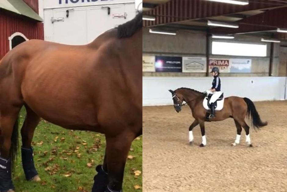 Veterinär dömde ut häst för snabbt – får erinran