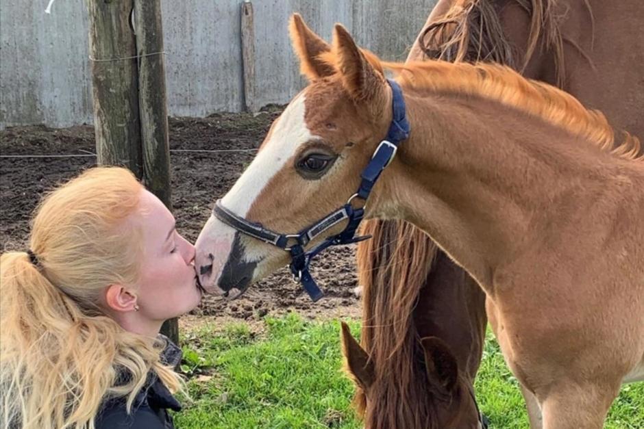 Äggen räddades när hon dog –  nu har svenskfödda EM-ponnyn fått en son
