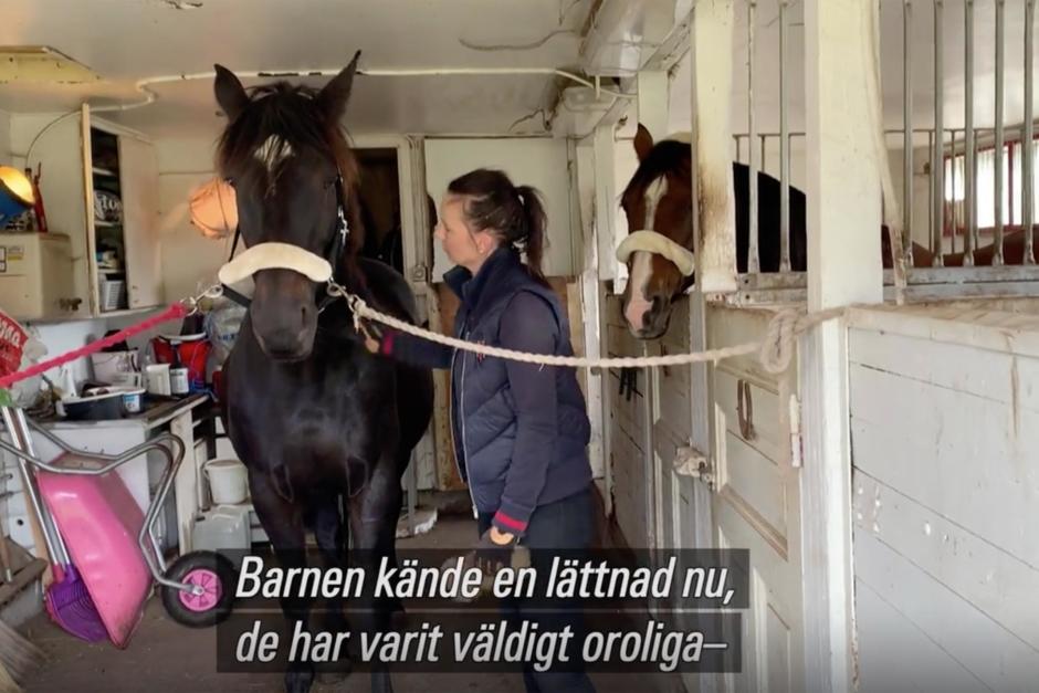 """Stympade ponnyn: """"Viktigt att oklara fall obduceras"""""""