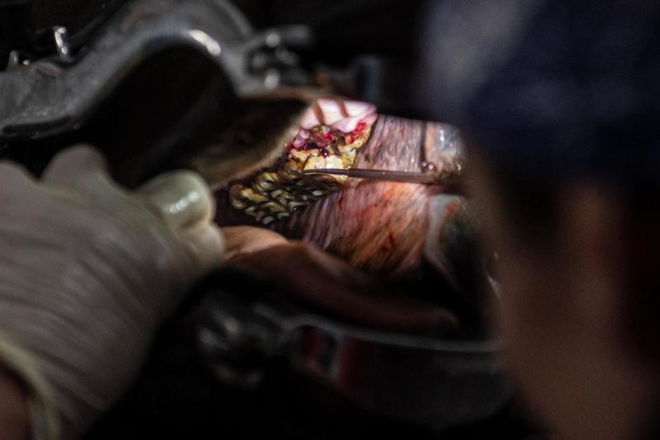 Ansvarsnämnden delar ut erinran till arg hovslagare och felbehandlande veterinär