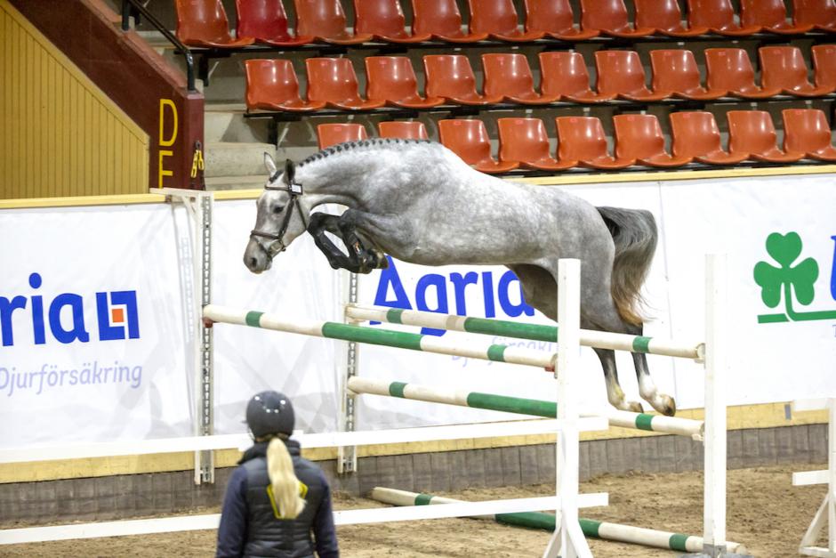 Hoppningen tar över SWB Equestrian Weeks