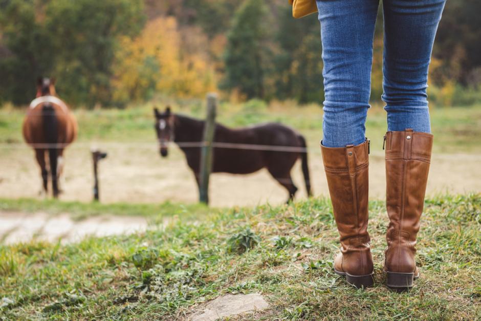 Hästhandlare i Skåne får djurförbud