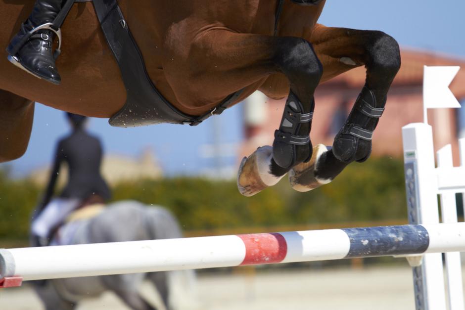 Abortvirus stoppar tävlingar – svenska hästar i karantän