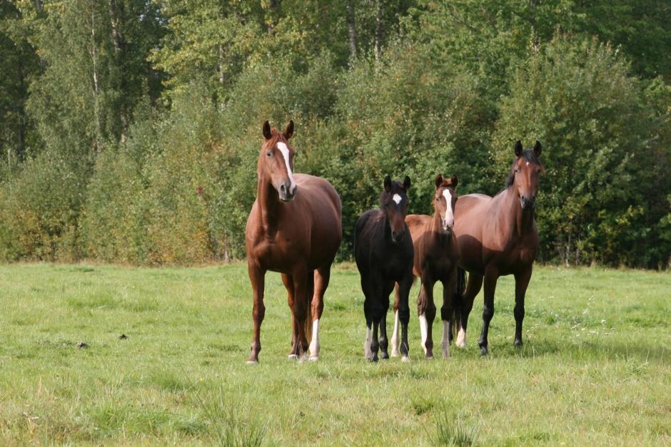 Lär dig mer om miljösmart hästverksamhet