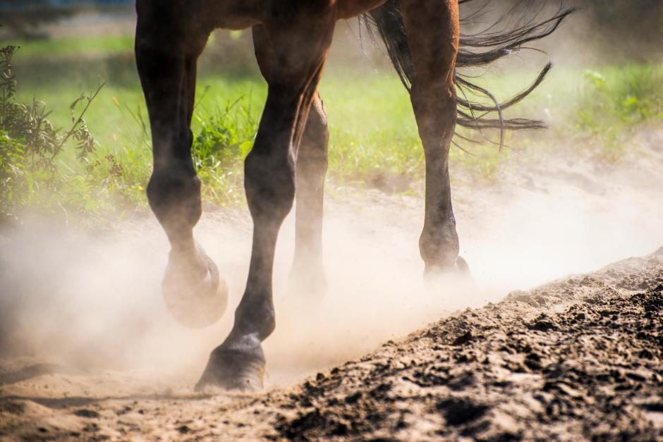 Hoppryttare dömd för grymhet mot häst